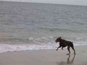 Photo Atticus at Beach