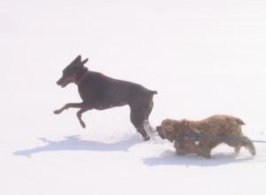 Photo Joe and Atticus in Snow
